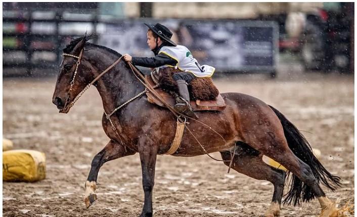 Cavalo Crioulo Símbolo Do Rio Grande Do Sul